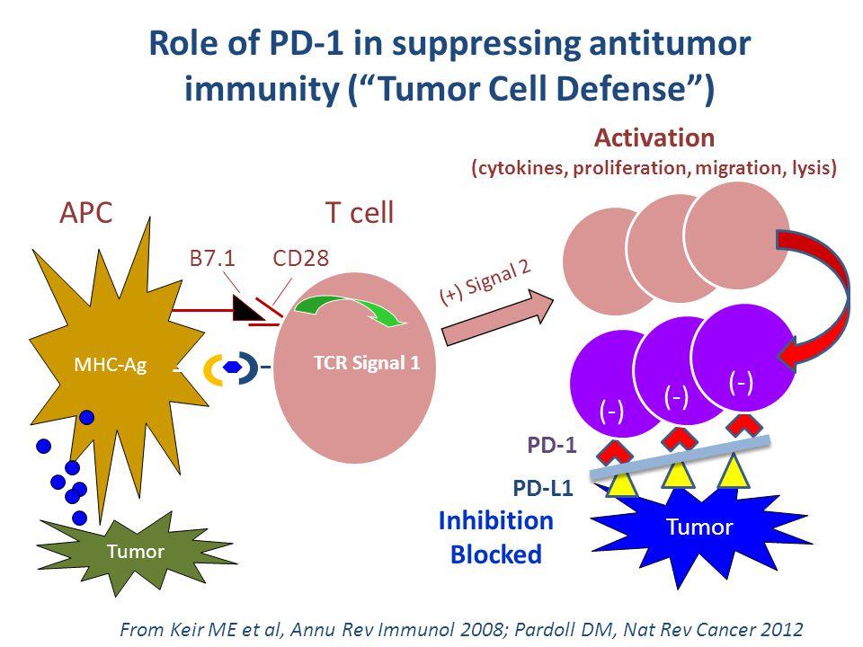 APCT cell (+) Signal 2 B7.1 CD28 TCR Signal 1 MHC-Ag Tumor PD-L1 PD-1 (-) Inhibition Blocked Anti- PD-1 From Keir ME et al, Annu Rev Immunol 2008; Par