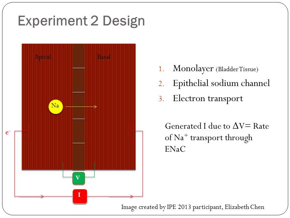 Experiment 2 Design 1.Monolayer (Bladder Tissue) 2.