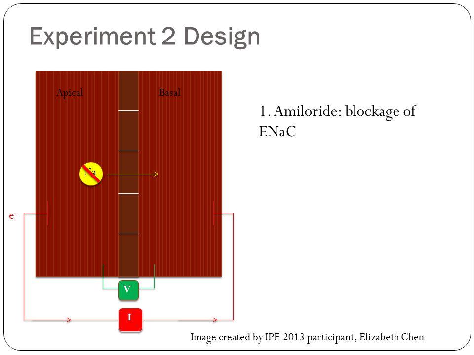 Experiment 2 Design 1.