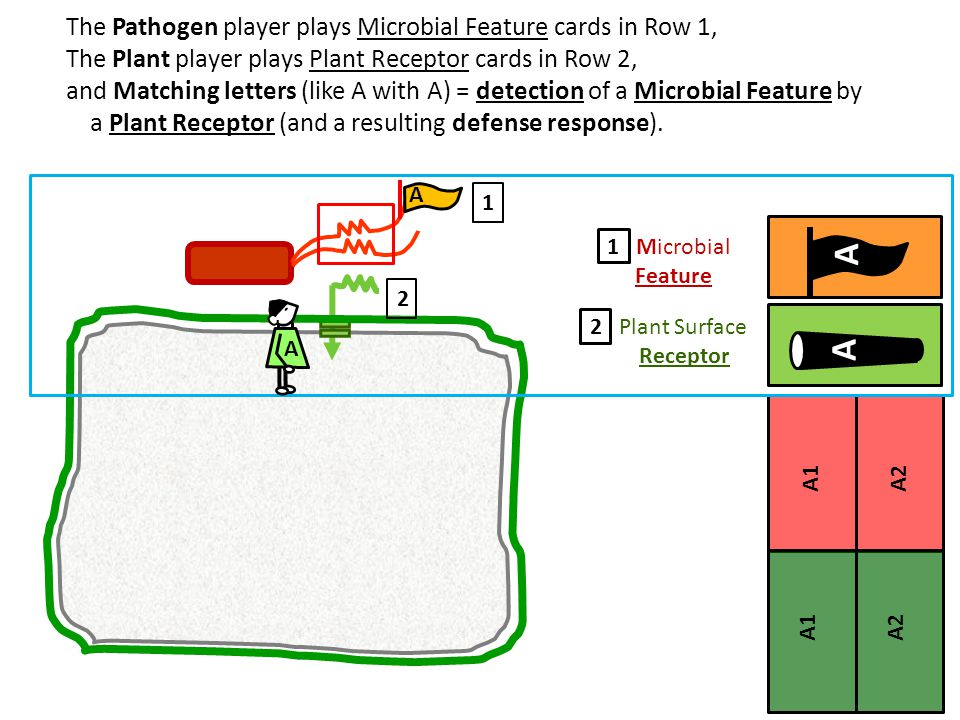 A1A2 A1A2A2 The Pathogen player plays Microbial Feature cards in Row 1, The Plant player plays Plant Receptor cards in Row 2, and Matching letters (li