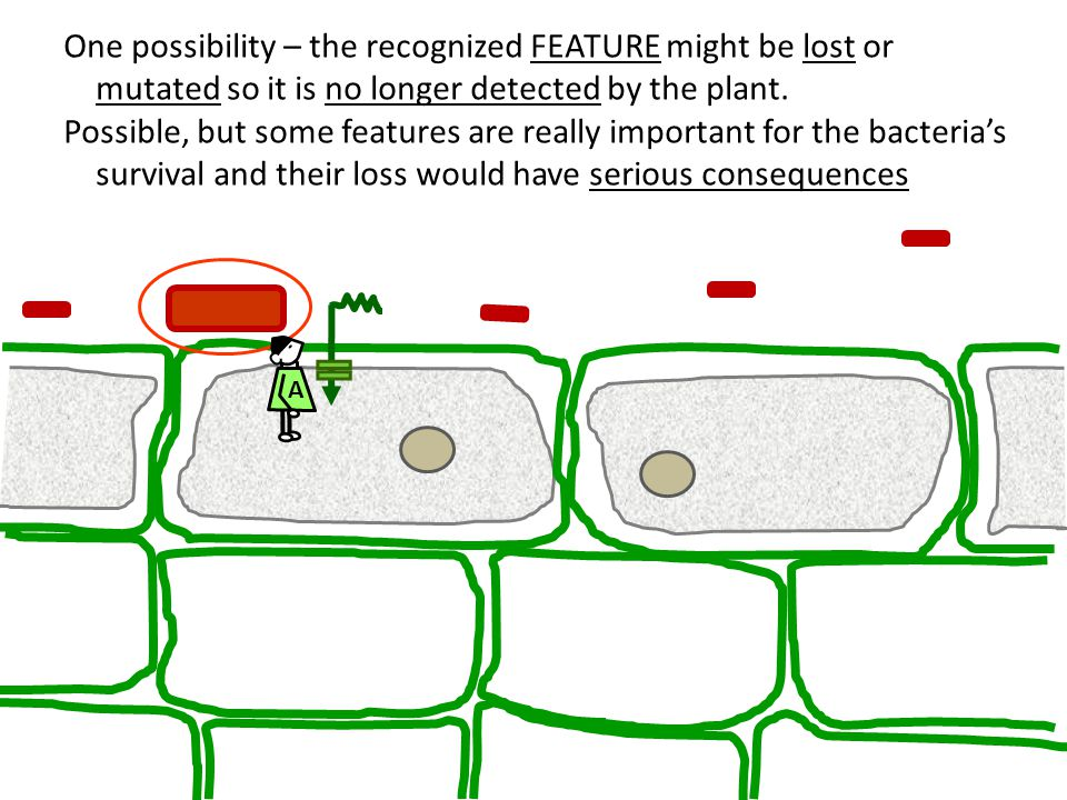 One possibility – the recognized FEATURE might be lost or mutated so it is no longer detected by the plant. Possible, but some features are really imp