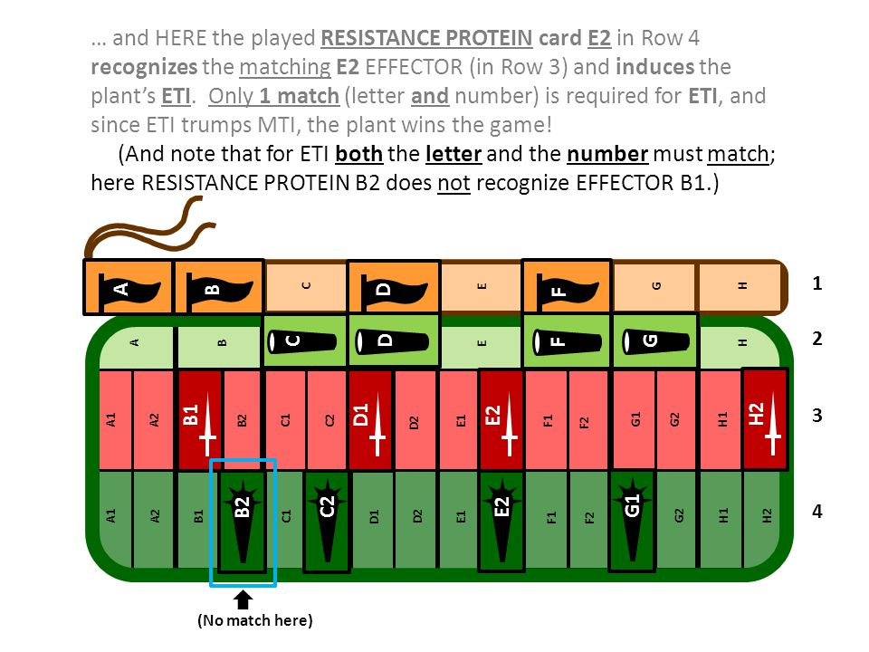 D B A F B1D1 E2H2 D C G F F G1E2C2 B2 1 2 3 4 … and HERE the played RESISTANCE PROTEIN card E2 in Row 4 recognizes the matching E2 EFFECTOR (in Row 3)