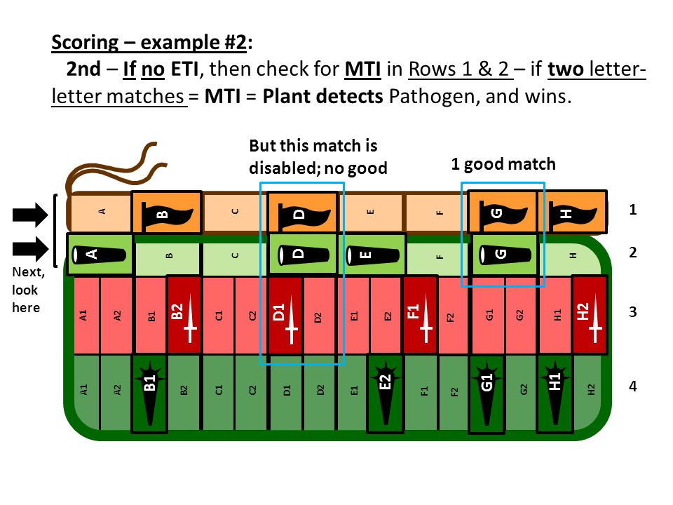 Scoring – example #2: 2nd – If no ETI, then check for MTI in Rows 1 & 2 – if two letter- letter matches = MTI = Plant detects Pathogen, and wins. 1 2