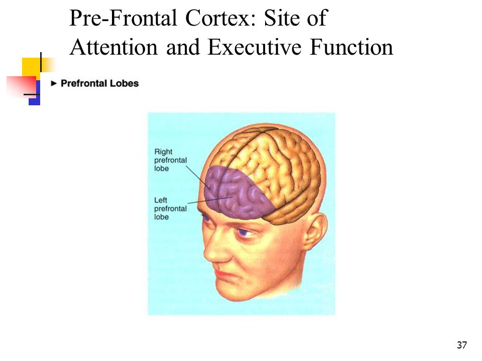 36 Executive Functioning Refers to the ability to regulate and direct one's emotions/behavior and to plan, initiate, attend to, and organize tasks Imp