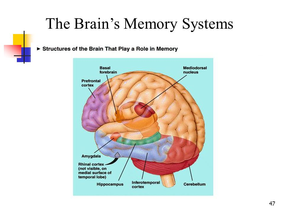 46 The Three Primary Levels of Memory: Short-Term Memory (STM): The briefest of memories – information is held for a few seconds before being discarde
