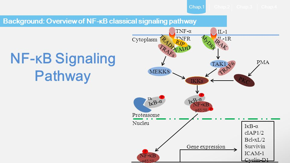 LOGO Chap.1 Chap.2 Chap.3 Chap.4 Background: Overview of NF-κB classical signaling pathway NF-κB Signaling Pathway FADD IκB-α NF-κB p65/50 NF-κB p65/5