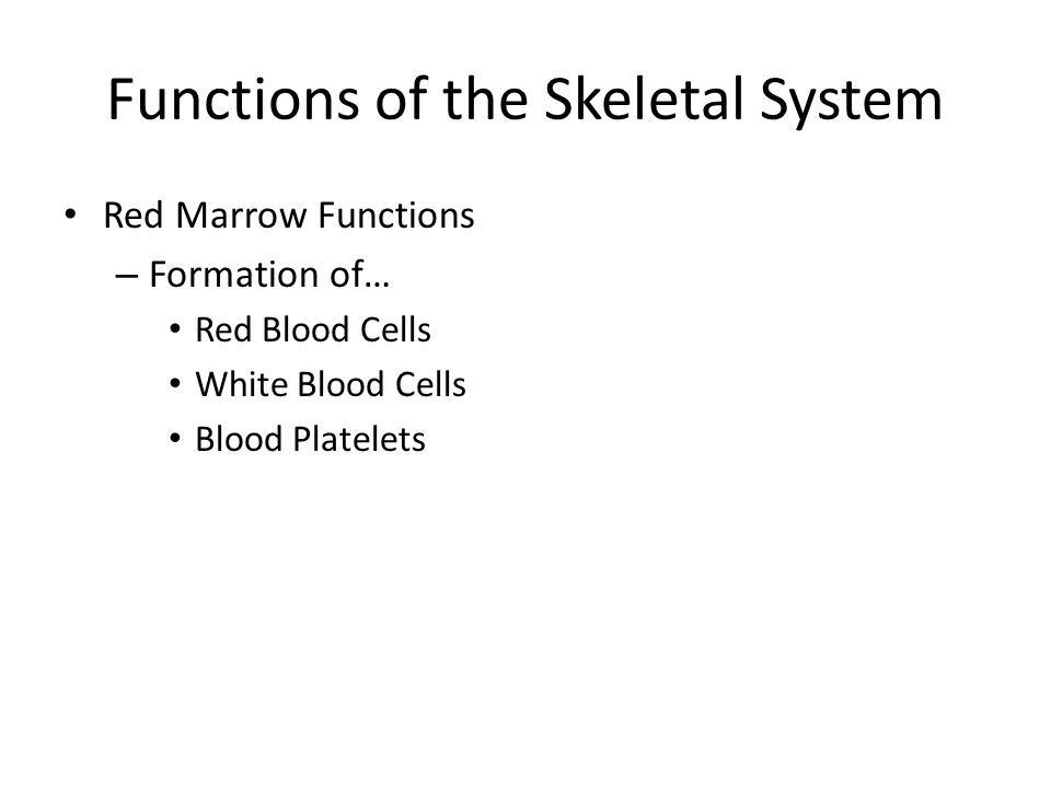Functions of the Skeletal System Red Marrow Functions – Formation of… Red Blood Cells White Blood Cells Blood Platelets