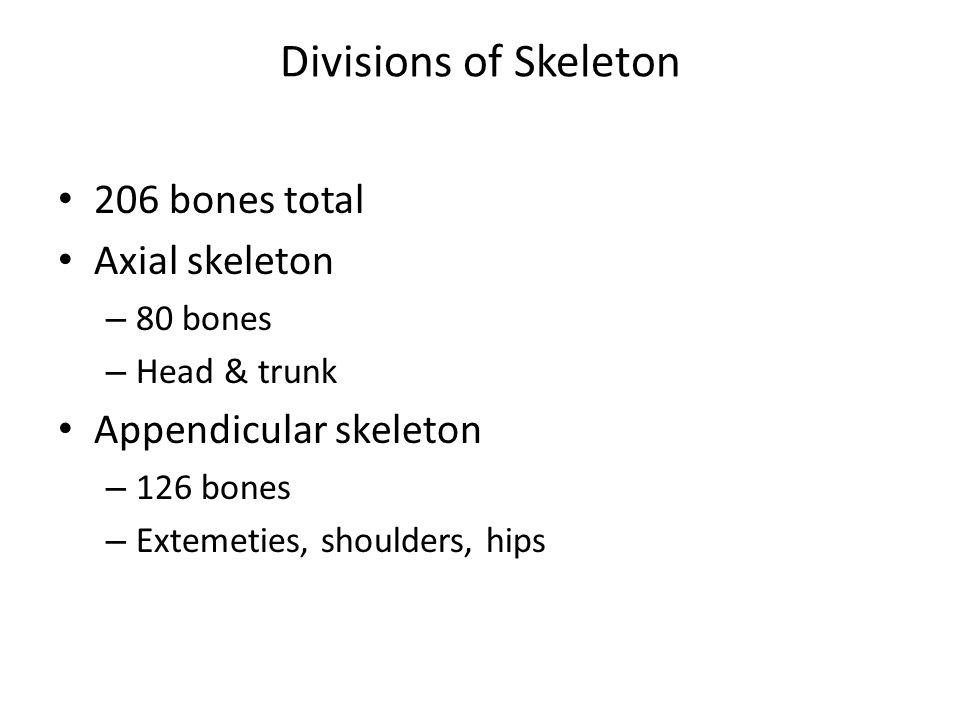 Divisions of Skeleton 206 bones total Axial skeleton – 80 bones – Head & trunk Appendicular skeleton – 126 bones – Extemeties, shoulders, hips