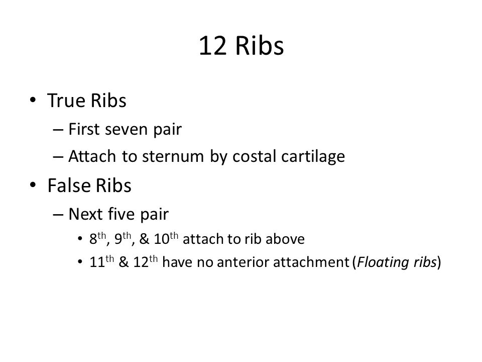 12 Ribs True Ribs – First seven pair – Attach to sternum by costal cartilage False Ribs – Next five pair 8 th, 9 th, & 10 th attach to rib above 11 th & 12 th have no anterior attachment (Floating ribs)