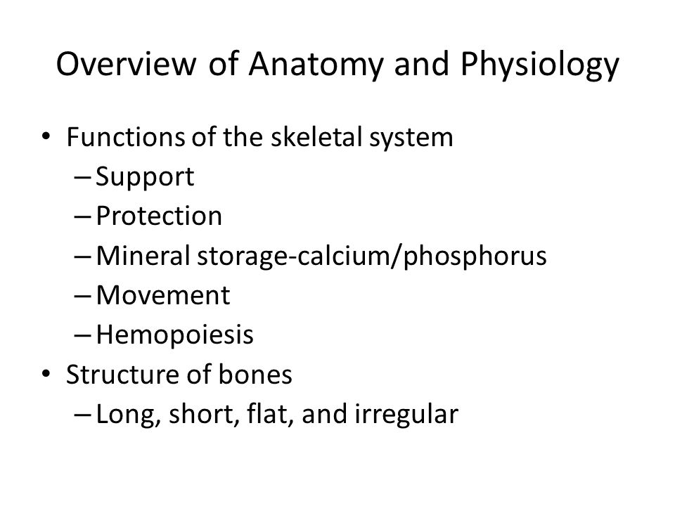 Overview of Anatomy and Physiology Functions of the skeletal system – Support – Protection – Mineral storage-calcium/phosphorus – Movement – Hemopoiesis Structure of bones – Long, short, flat, and irregular