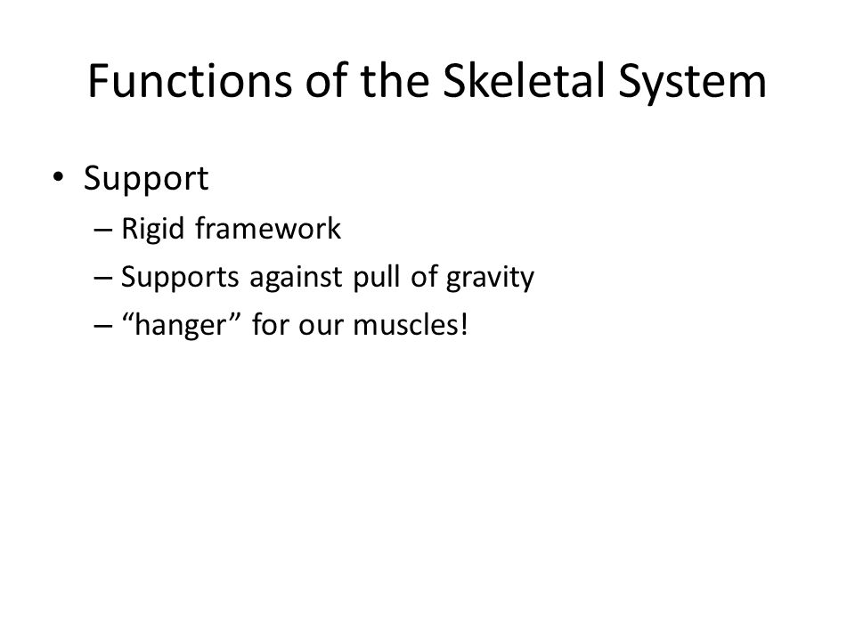Functions of the Skeletal System Support – Rigid framework – Supports against pull of gravity – hanger for our muscles!