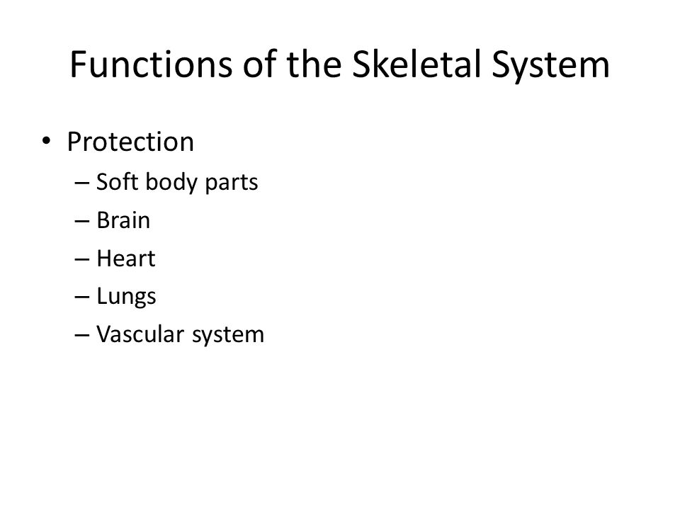 Functions of the Skeletal System Protection – Soft body parts – Brain – Heart – Lungs – Vascular system