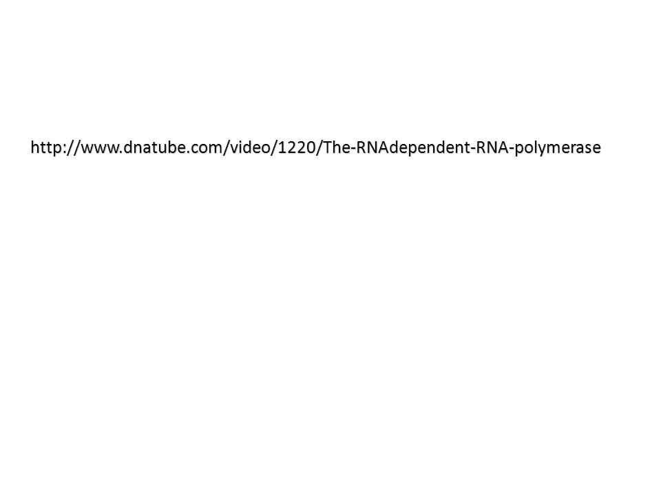 http://www.dnatube.com/video/1220/The-RNAdependent-RNA-polymerase