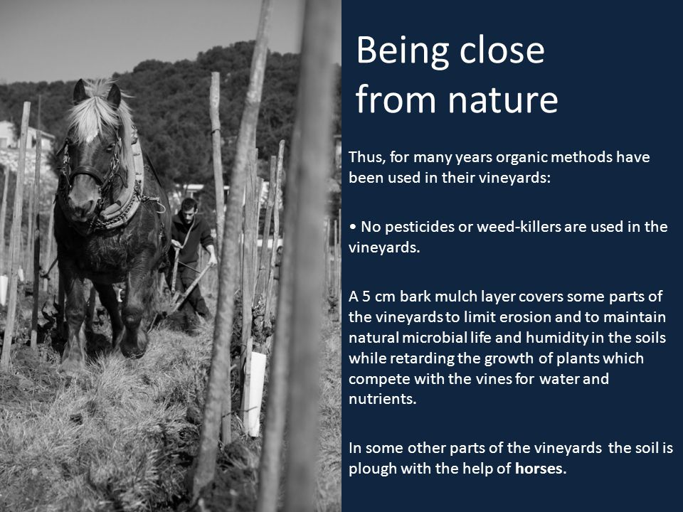 Being close from nature Thus, for many years organic methods have been used in their vineyards: No pesticides or weed-killers are used in the vineyard