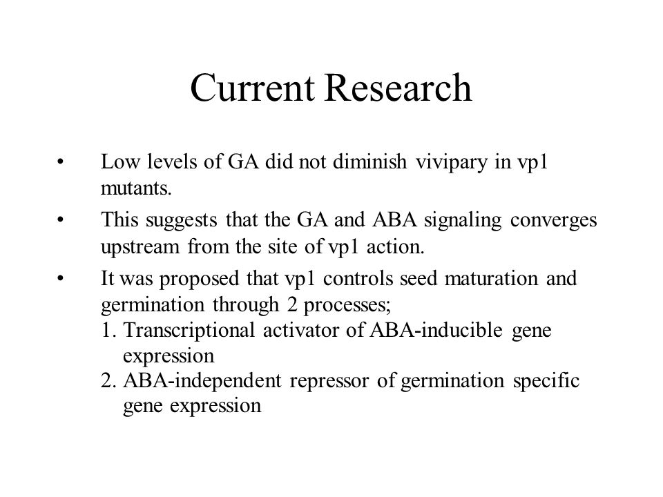 Current Research Low levels of GA did not diminish vivipary in vp1 mutants. This suggests that the GA and ABA signaling converges upstream from the si