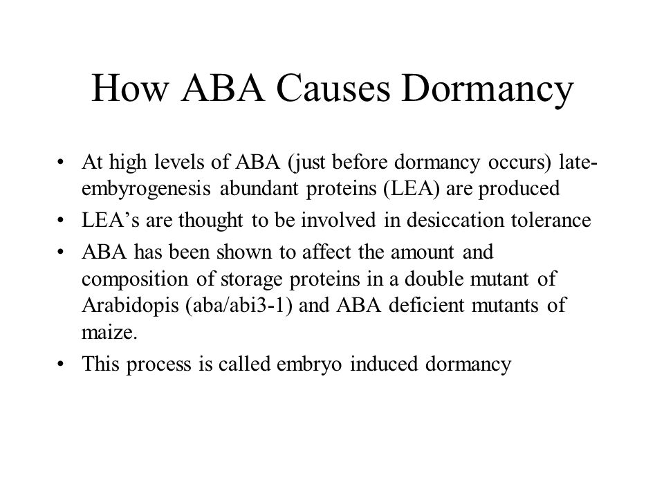 How ABA Causes Dormancy At high levels of ABA (just before dormancy occurs) late- embyrogenesis abundant proteins (LEA) are produced LEA's are thought to be involved in desiccation tolerance ABA has been shown to affect the amount and composition of storage proteins in a double mutant of Arabidopis (aba/abi3-1) and ABA deficient mutants of maize.