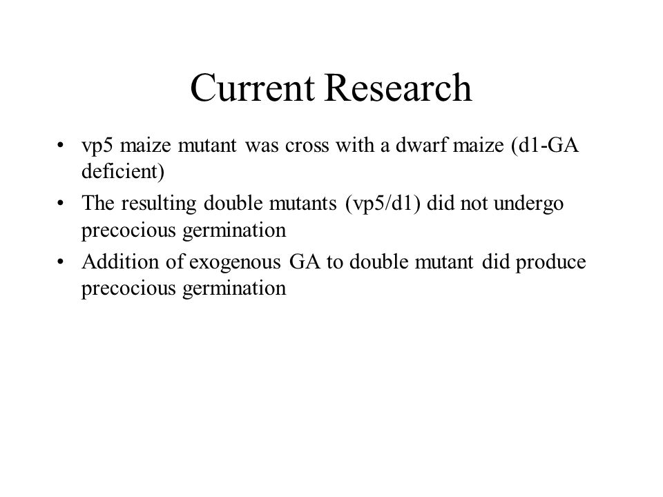 Current Research vp5 maize mutant was cross with a dwarf maize (d1-GA deficient) The resulting double mutants (vp5/d1) did not undergo precocious germination Addition of exogenous GA to double mutant did produce precocious germination