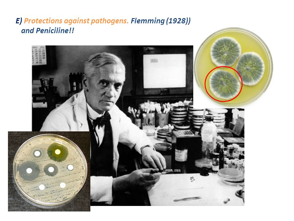 E) Protections against pathogens. Flemming (1928)) and Peniciline!!