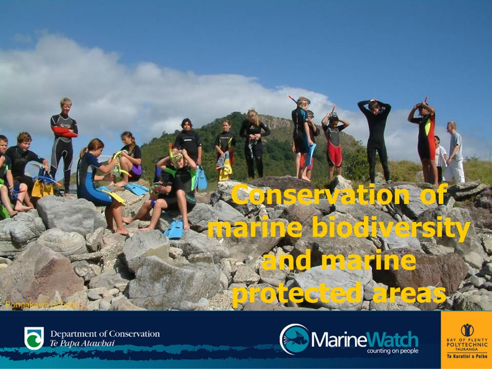 Conservation of marine biodiversity and marine protected areas Pongakawa School