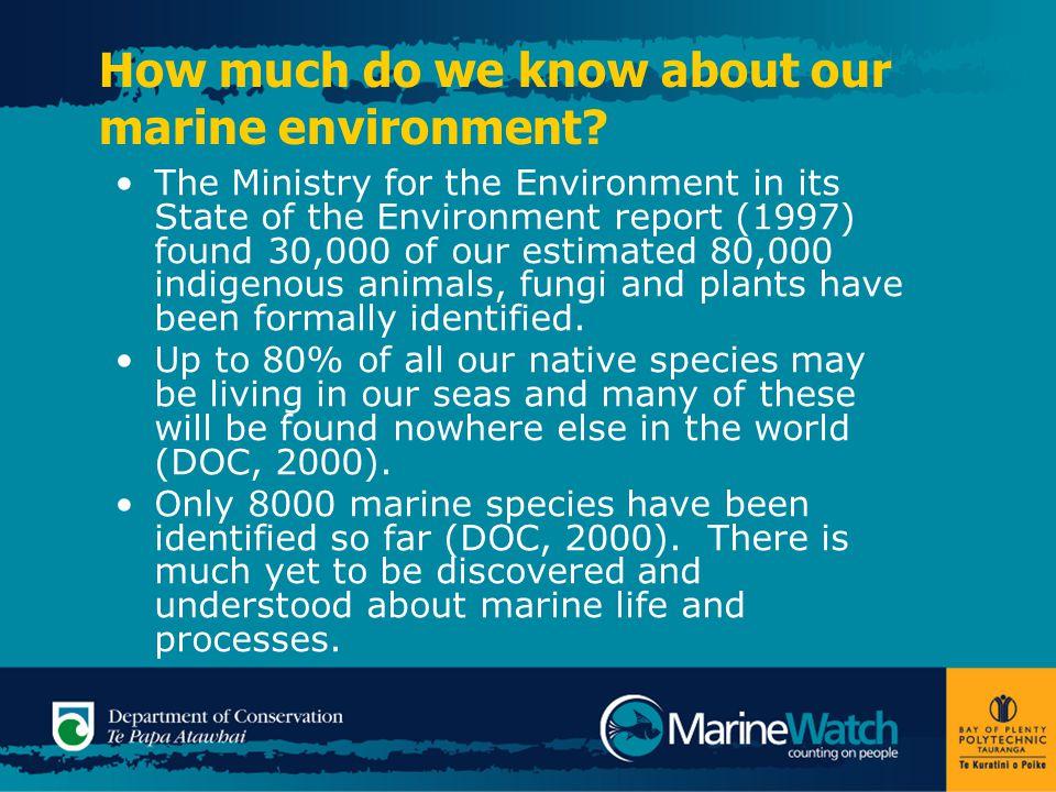 NZ Marine Biodiversity Protection Of the 8000 NZ marine species identified so far there are: 61 seabirds 41 marine mammals 964 fishes 2000 molluscs 300 sponges 400 echinoderms 900 seaweeds 700 micro-algae (DOC, 2000:13) Photo © Indigo Pacific