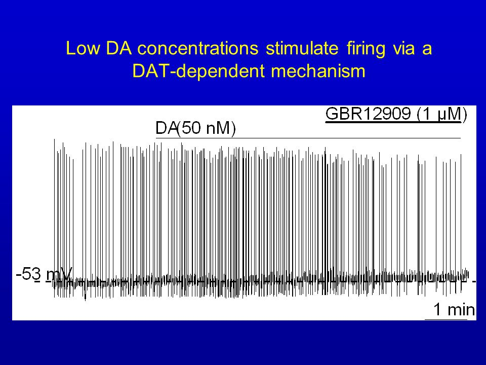 Low DA concentrations stimulate firing via a DAT-dependent mechanism
