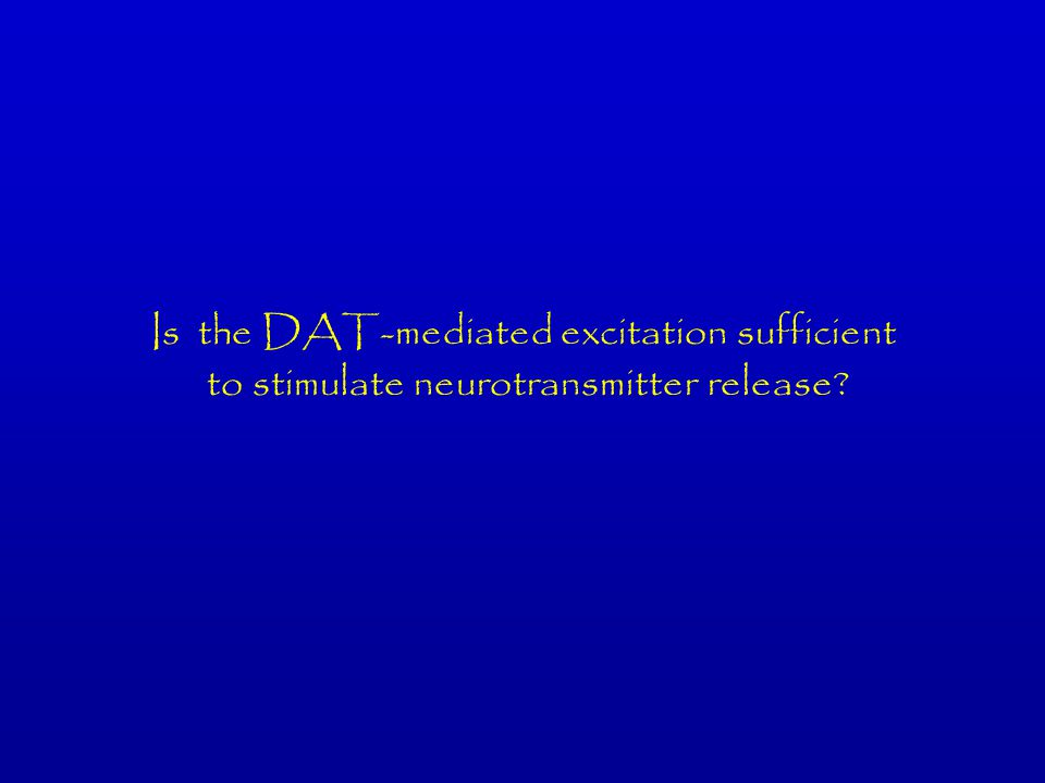 Is the DAT-mediated excitation sufficient to stimulate neurotransmitter release