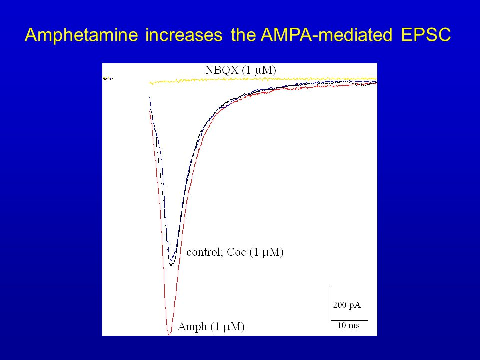 Amphetamine increases the AMPA-mediated EPSC