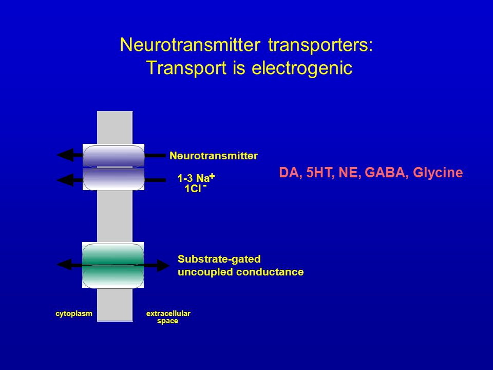Neurotransmitter transporters: Transport is electrogenic cytoplasmextracellular space Neurotransmitter 1-3 Na + 1Cl - DA, 5HT, NE, GABA, Glycine Substrate-gated uncoupled conductance