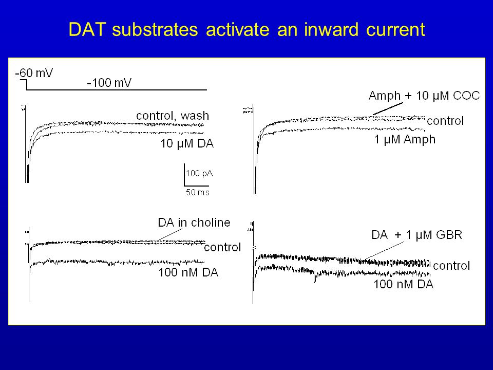 DAT substrates activate an inward current