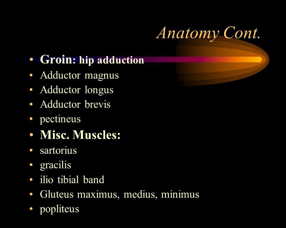 Anatomy Quadriceps: hip flexion and knee extension vastus medialis vastus lateralis vastus intermedius rectus femoris Hamstrings: knee flexion Biceps femoris semitendinosus semimembranosus