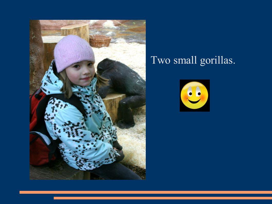 Two small gorillas.