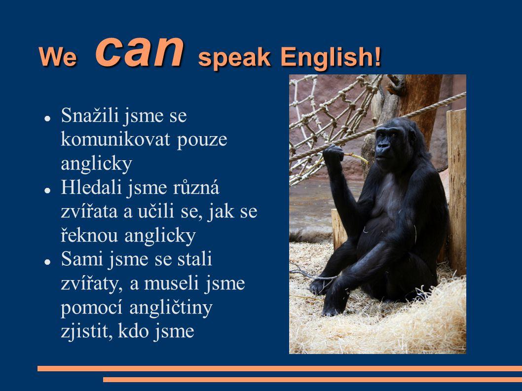 We can speak English.