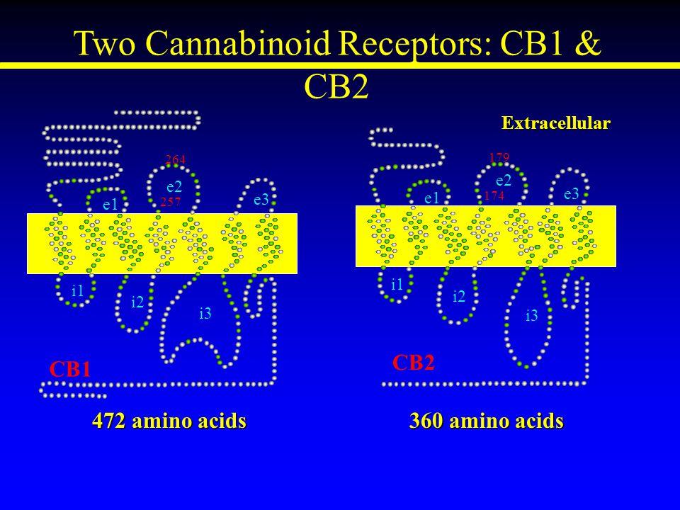 Two Cannabinoid Receptors: CB1 & CB2 174 179 CB2 e1 e2 e3 i1 i2 i3 Extracellular 472 amino acids 360 amino acids