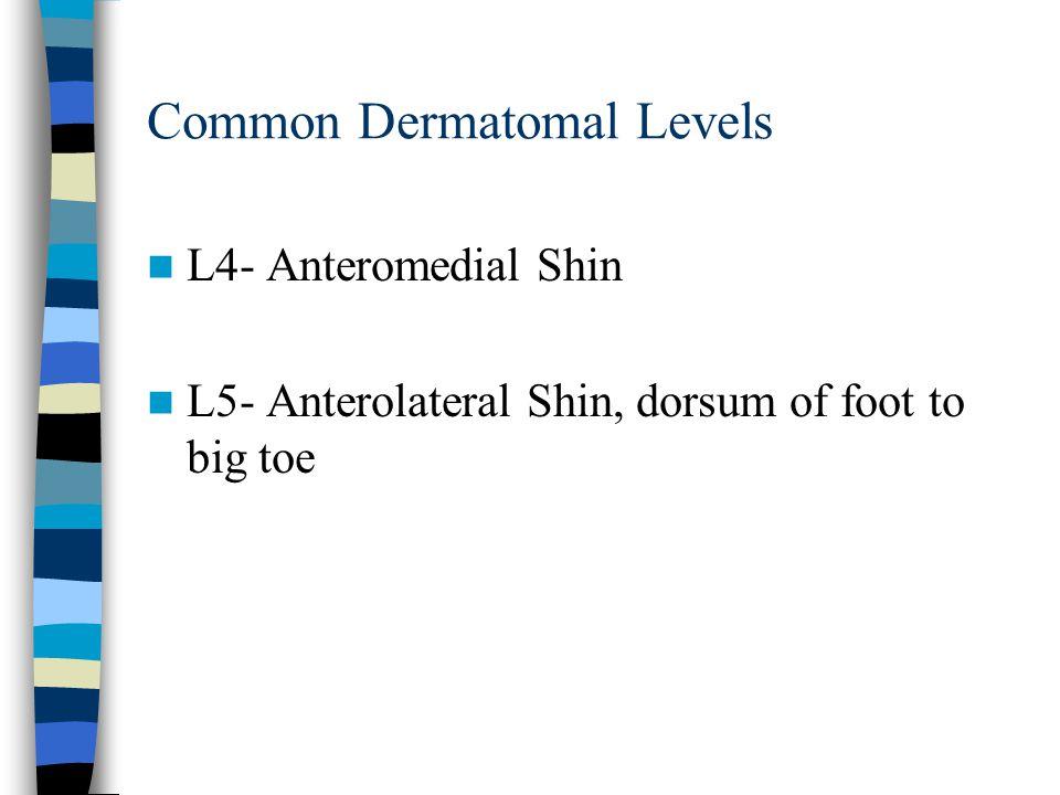 Common Dermatomal Levels L4- Anteromedial Shin L5- Anterolateral Shin, dorsum of foot to big toe