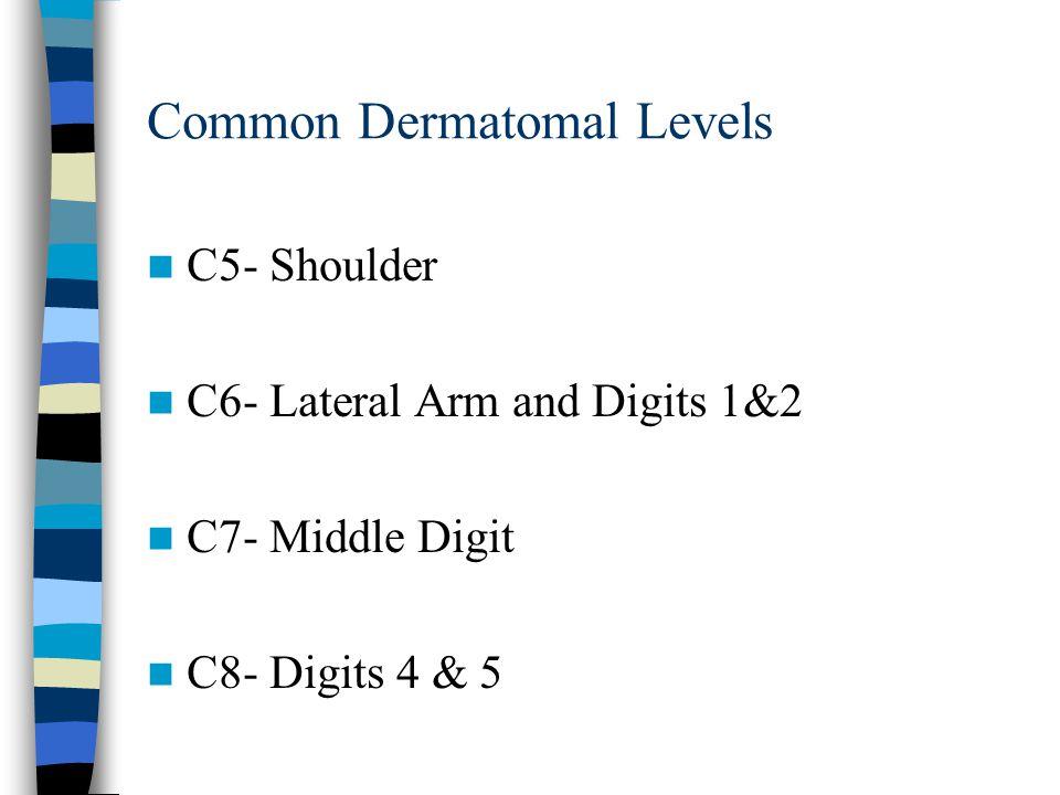 Common Dermatomal Levels C5- Shoulder C6- Lateral Arm and Digits 1&2 C7- Middle Digit C8- Digits 4 & 5