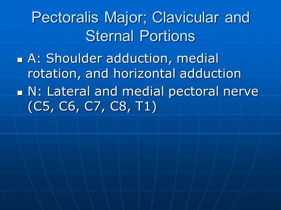 Pectoralis Major; Clavicular and Sternal Portions A: Shoulder adduction, medial rotation, and horizontal adduction A: Shoulder adduction, medial rotat