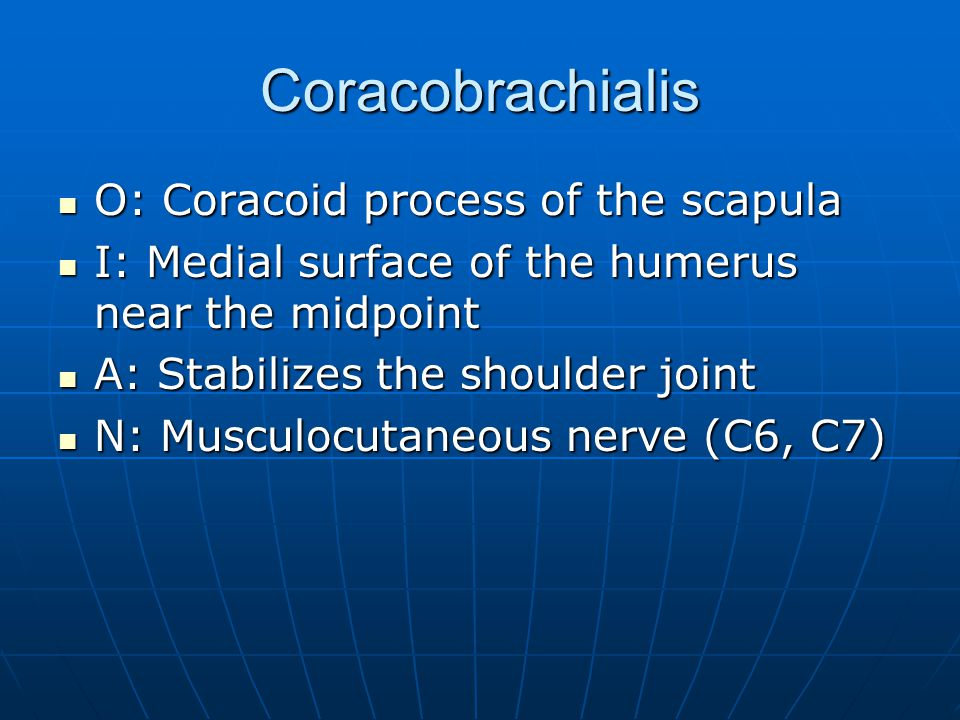 Coracobrachialis O: Coracoid process of the scapula O: Coracoid process of the scapula I: Medial surface of the humerus near the midpoint I: Medial su
