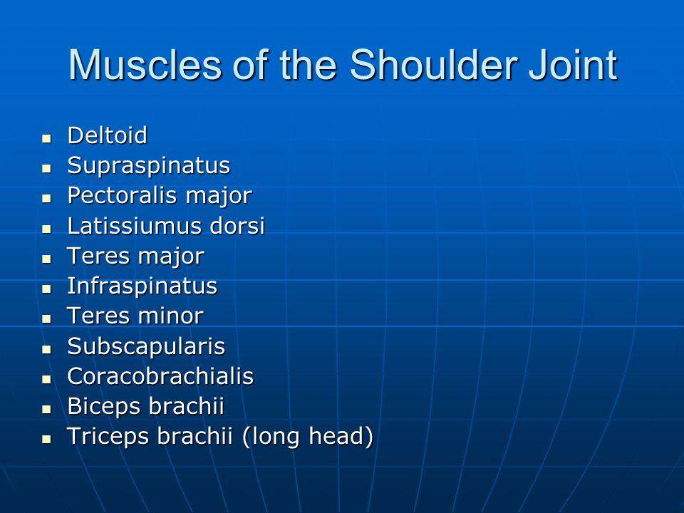 Muscles of the Shoulder Joint Deltoid Deltoid Supraspinatus Supraspinatus Pectoralis major Pectoralis major Latissiumus dorsi Latissiumus dorsi Teres