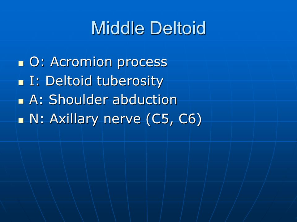 Posterior Deltoid O: Spine of scapula O: Spine of scapula I: Deltoid tuberosity I: Deltoid tuberosity A: Shoulder abduction, extension, hyperextension, lateral rotation, horizontal abduction A: Shoulder abduction, extension, hyperextension, lateral rotation, horizontal abduction N: Axillary nerve (C5, C6) N: Axillary nerve (C5, C6)