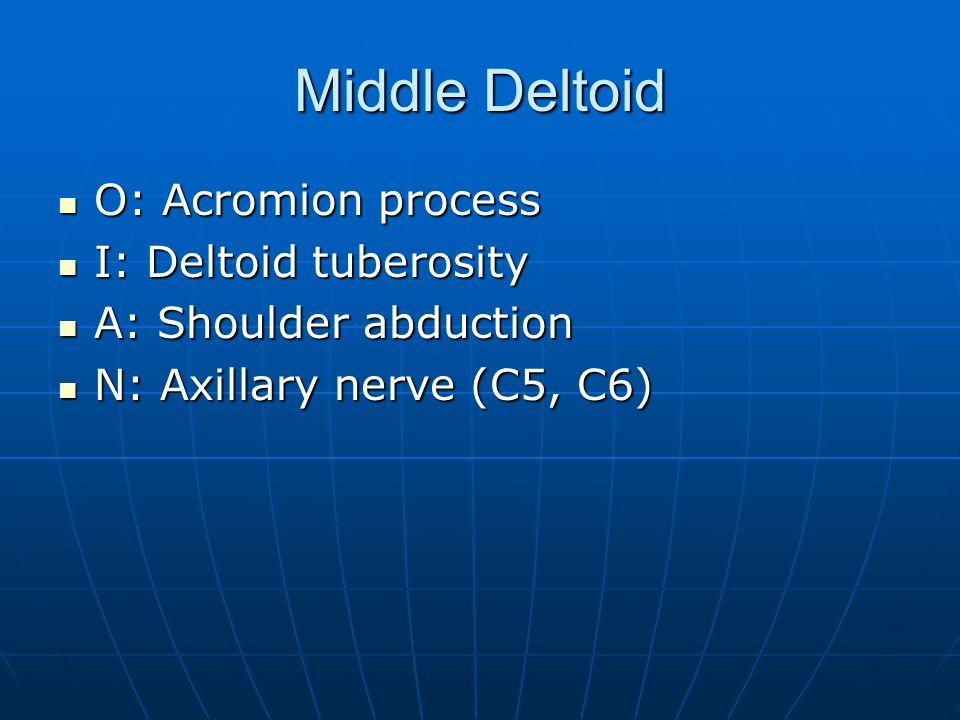 Middle Deltoid O: Acromion process O: Acromion process I: Deltoid tuberosity I: Deltoid tuberosity A: Shoulder abduction A: Shoulder abduction N: Axil