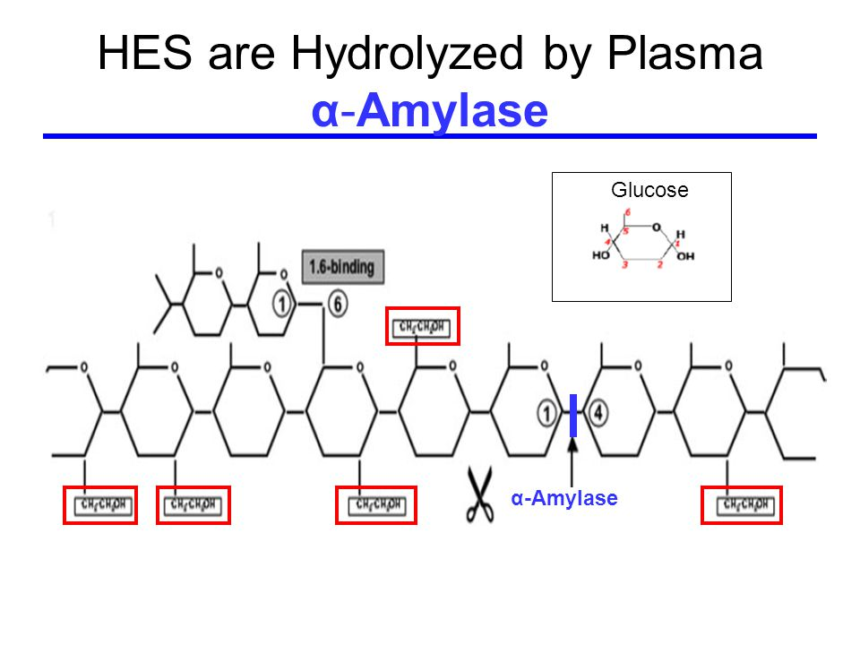 HES are Hydrolyzed by Plasma α-Amylase α-Amylase Glucose