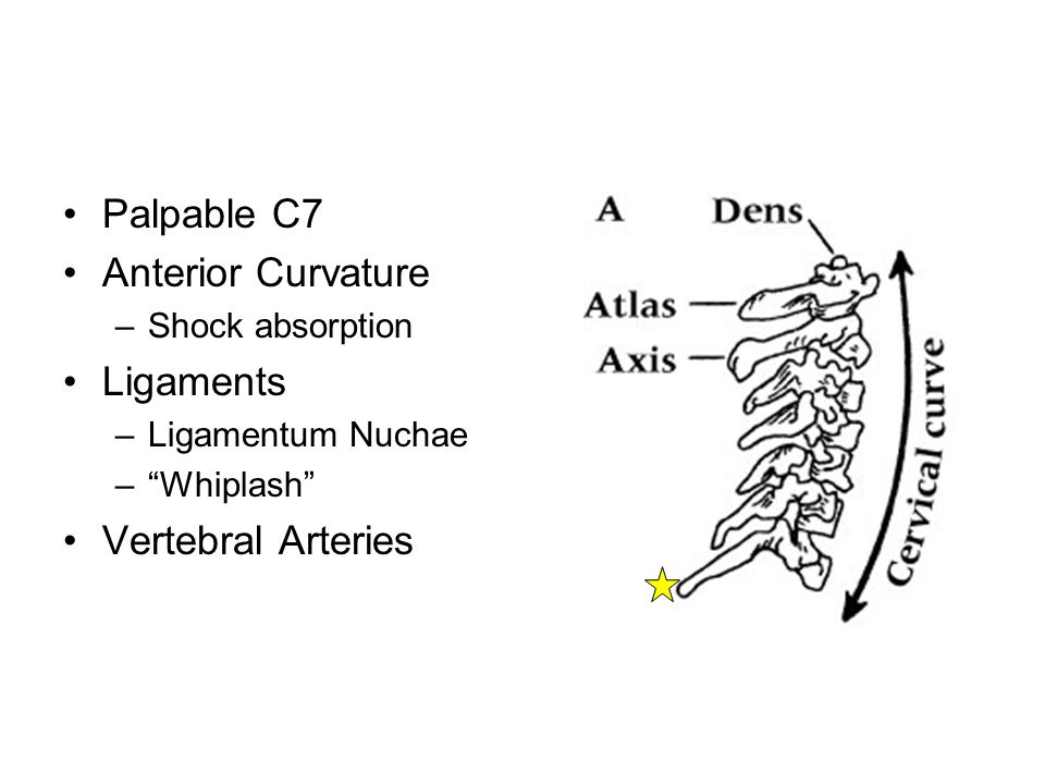 Anterior Palpation Sternomastoid –Sternum (near SC joint) to mastoid process Scalenes –Posterior/lateral to sternomastoid muscles –Difficult to differentiate, palpate collectively Carotid artery –Primary pulse point Lymph nodes –Only discernable if enlarged due to illness