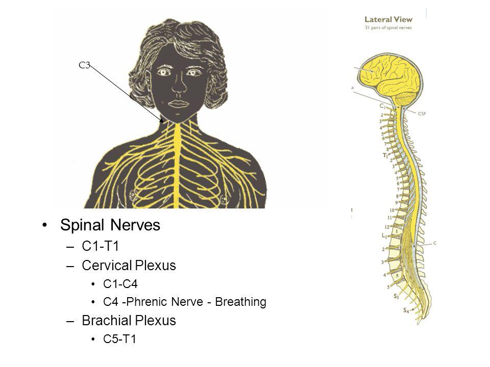 Neurological Testing Dermatomes Reflexes –Babinski –Oppenheim –Biceps –Brachioradialis –Triceps Myotomes
