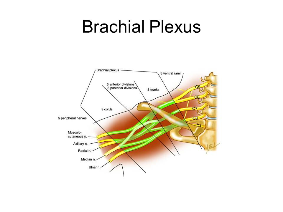 Vertebral Artery Impingment Due to anatomic location, may be compromised with same mechanism of injury as brachial plexus/cervical nerve root impingement injuries Signs and symptoms –Dizziness –Confusion –Nystagmus