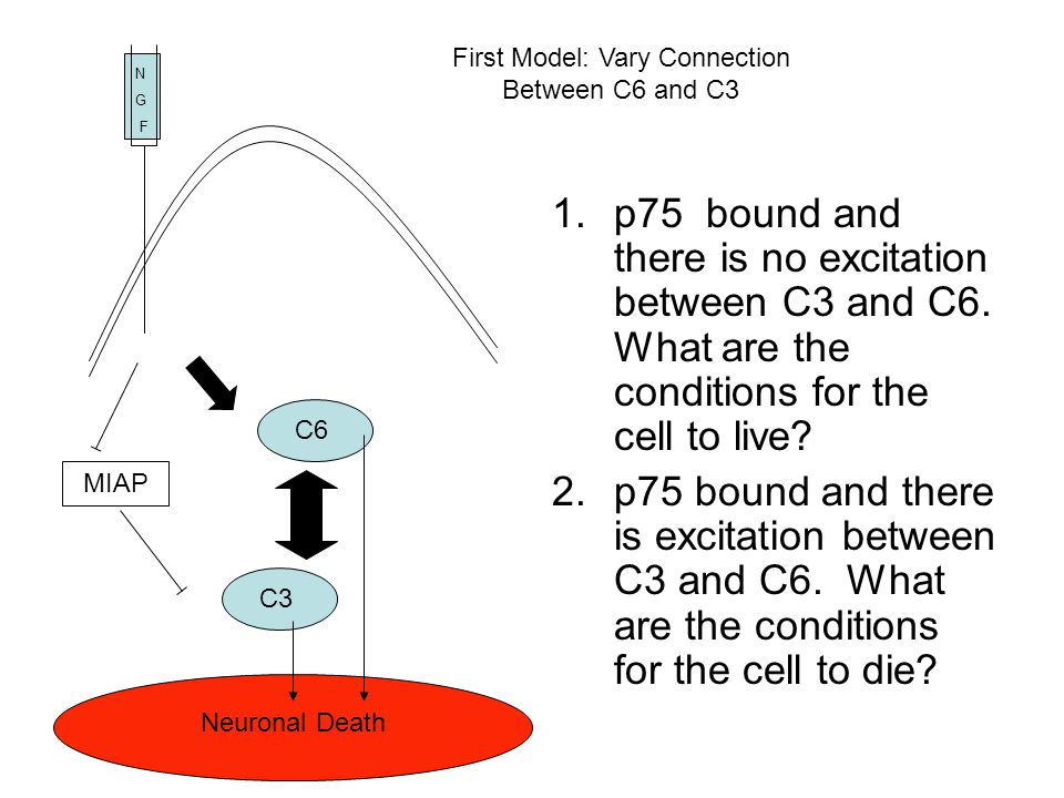 N G F Neuronal Death MIAP C6C3 1.p75 bound and there is no excitation between C3 and C6. What are the conditions for the cell to live? 2.p75 bound and