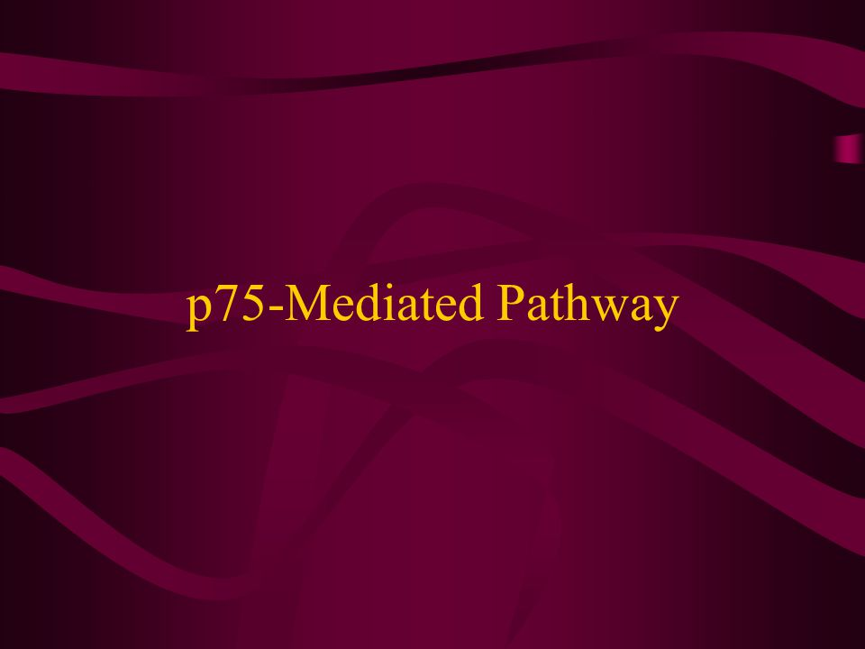 p75-Mediated Pathway