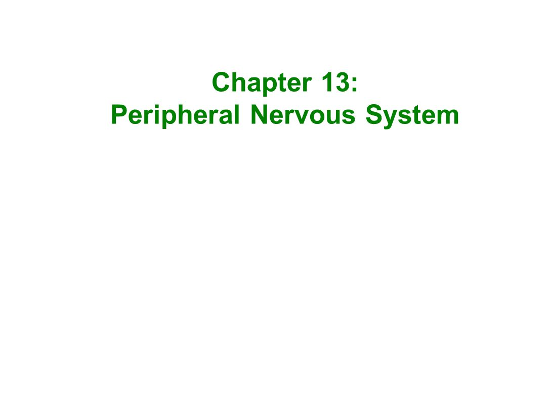 Chapter 13: Peripheral Nervous System