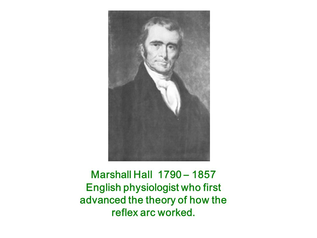 Marshall Hall 1790 – 1857 English physiologist who first advanced the theory of how the reflex arc worked.
