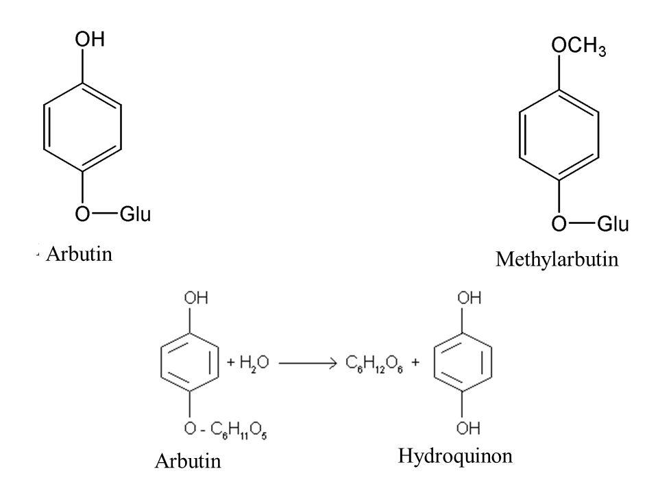 Arbutin Methylarbutin Arbutin Hydroquinon