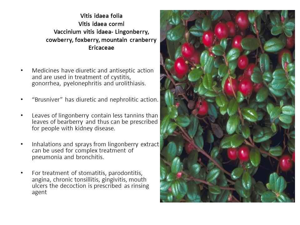 Vitis idaea folia Vitis idaea cormi Vaccinium vitis idaea- Lingonberry, cowberry, foxberry, mountain cranberry Ericaceae Medicines have diuretic and antiseptic action and are used in treatment of cystitis, gonorrhea, pyelonephritis and urolithiasis.